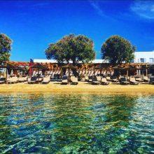 Cactus Beach Bar – SP001